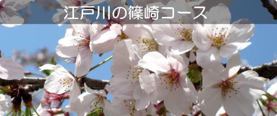 江戸川 篠崎コース